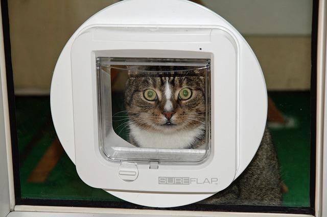 cat flap in french door